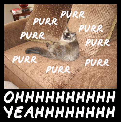 Purrrrr