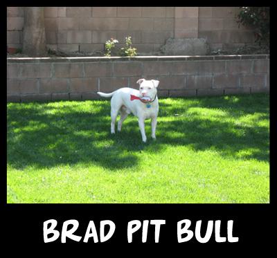 Brad-pit